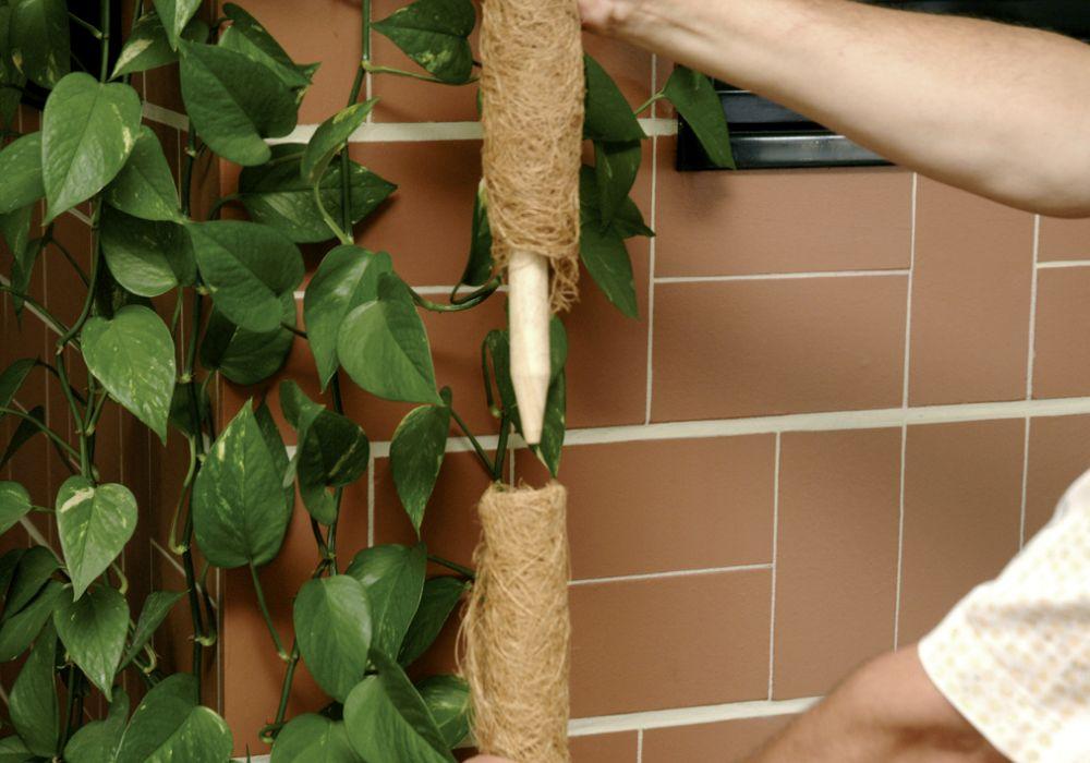 Pflanzstab tuteur plantes poteau pflanzstäbe Lien de coco 80 cm